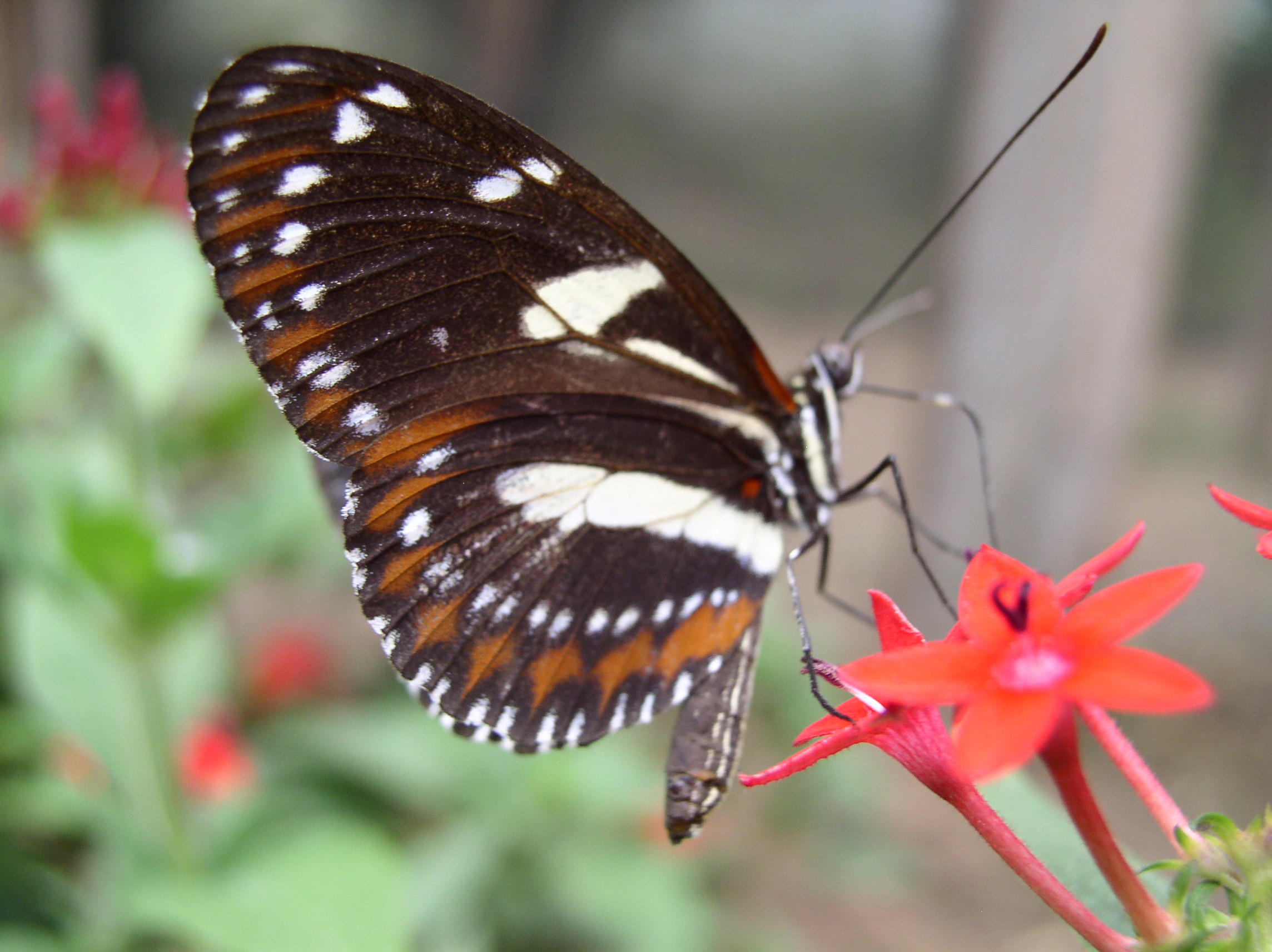 heliconius butterfly works   ecuador